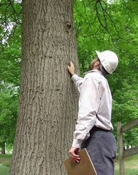 Basic Tree Survey and Inspection Course (1 Day) Course