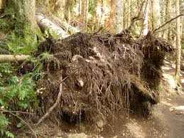 Severing Uprooted or Windblown Trees Using a Chainsaw Course