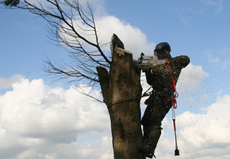 Chainsaw Maintenance, Cross-cutting, Basic Felling up to 200mm Course