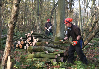 Refresher – Chainsaw Maintenance, Cross Cutting and Felling up to or over 380mm Course
