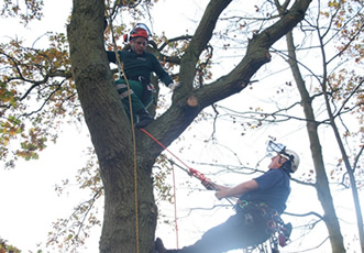 Tree Climbing & Aerial Rescue Course