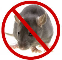 Rodent Control (Responsible and effective control of Commensal Rodent) Course