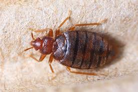 Professional Bed Bug Control Course