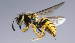 Professional Wasp and Bee Control Course